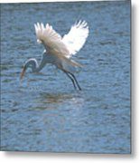 Catch Of The Day Series - 3 Metal Print