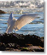 Catching Rays At The Beach Metal Print