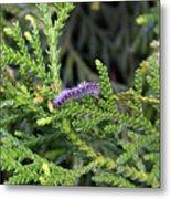 Caterpillar On Branch Metal Print
