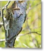 Caterpillars #2 Metal Print by Stephanie  Varner