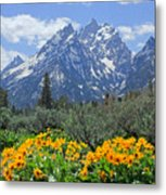 Dm9328-cathedral Group Tetons  Metal Print