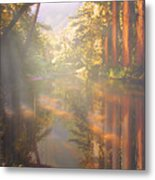 Cathedral Redwoods Metal Print