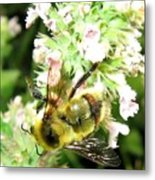 Catnip And The Bee Metal Print