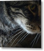 Cats Eye Metal Print