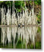 Cattail Reflection Metal Print