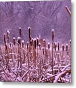 Cattails Ala Mode Metal Print by Cynthia  Cox Cottam