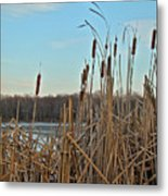 Cattails At Skymount Pond Pa Metal Print