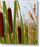 Cattails Delight Metal Print