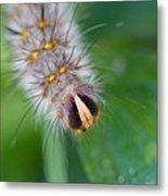 Catterpillar In Close Up 2 Metal Print
