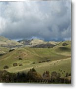 Cattle And Countryside Photograph Metal Print