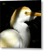 Cattle Egret In Shadow Metal Print