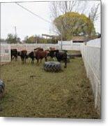 Cattle Metal Print