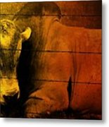 Cattle In Sunny Texas Metal Print