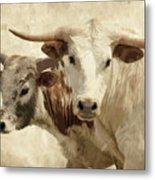 Cattle Steers Metal Print
