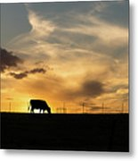Cattle Sunset Silhouette Metal Print