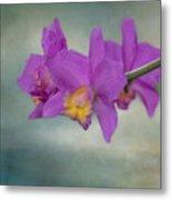 Cattleya Orchid  Metal Print