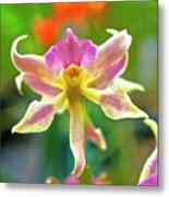 Caucaea Rhodosticta Orchid Metal Print