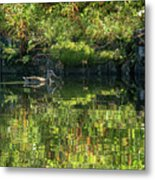 Caught In The Reflection Metal Print