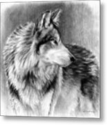 Cautious Eyes Metal Print