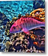 Cayman Snapper Metal Print