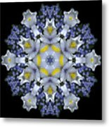 Ceanothus Iris Medley 1 Metal Print