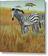 Cebras  In  Rhino  Park Metal Print
