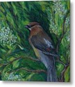 Cedar Waxwing In Lilac Metal Print