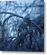 Cedars Of Ice Metal Print