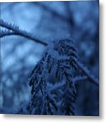 Cedars Of Ice II Metal Print