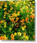 Celebration Of Yellows And Oranges Study 4 Metal Print