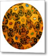 Cell Network Metal Print