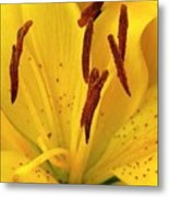 Center Of A Lily Metal Print