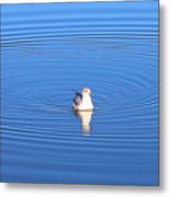Center Of Attention  3247 Metal Print