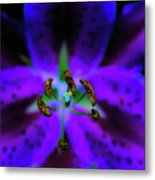 Center Of The Asiatic Lily Metal Print