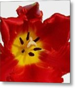 Center Of Tulip Metal Print
