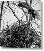Centerport Eagle 1 Metal Print