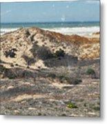 Central Coast Sand Dunes Metal Print
