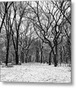 Central Park 1 Metal Print by Wayne Gill