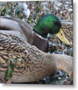 Central Park Ducks Metal Print