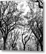 Central Park Nyc In Black And White Metal Print