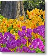 Central Park Tulip Display Metal Print