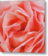 Centre - Rose Metal Print