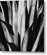 Century Plant Metal Print