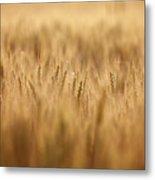 Cereal Field Metal Print