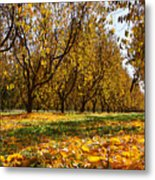 Ceres Orchard - Fall Metal Print