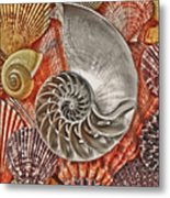Chambered Nautilus Shell Abstract Metal Print by Garry Gay