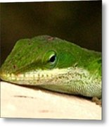 Chameleon 2 Metal Print