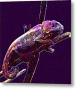 Chameleon Reptile Dinosaur Colors  Metal Print