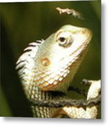 Chameleon Up-close 1 Metal Print
