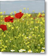 Chamomile And Poppy Flowers Meadow Metal Print